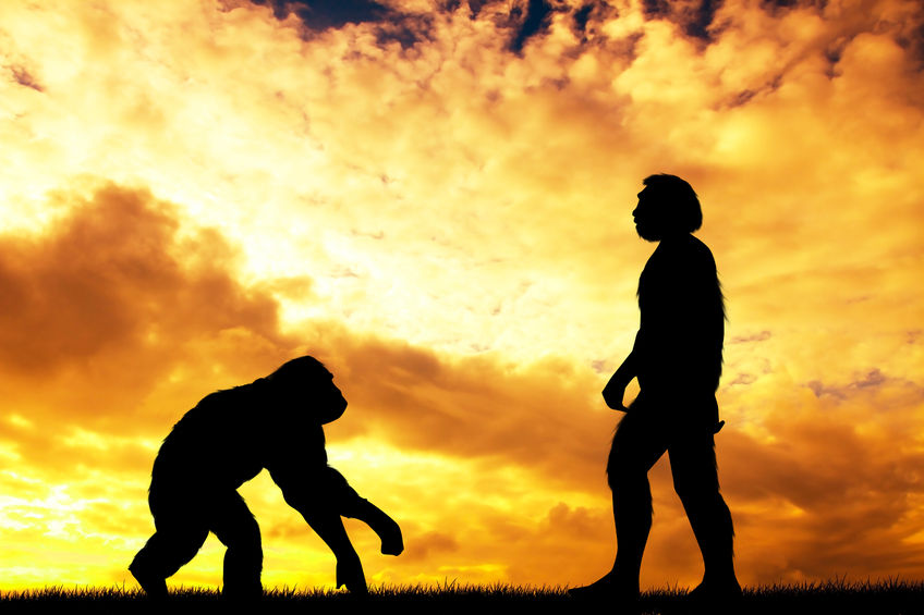 Evolution image show silhouettes of an ape and man