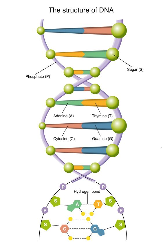 DNA - is its existence compatible with science and the bible
